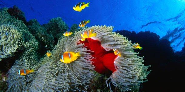 Korallenriff um 80 Prozent geschrumpft