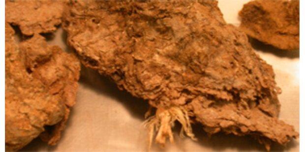 14.300 Jahre alter Kot in Amerika entdeckt