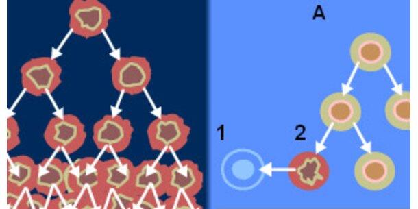 Gene verantwortlich für Krebswachstum