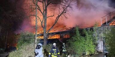 Feuer-Drama im Zoo: Alle Tiere im Affenhaus tot