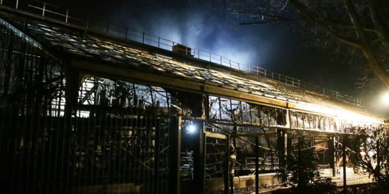 Flammen-Drama in deutschem Affenhaus – Zoo öffnet wieder