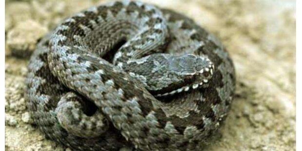 Wanderer von Schlange gebissen