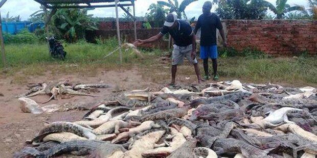 Dorfbewohner schlachteten 292 Krokodile ab