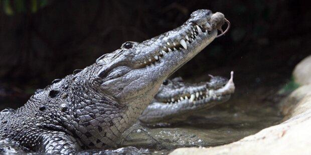 Mann beim Zelten von Krokodil attackiert