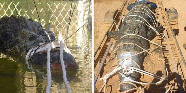 Australier fangen 600 Kilo Riesen-Krokodil