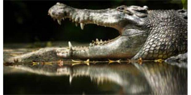 Mysteriöses Krokodil-Sterben in Nationalpark
