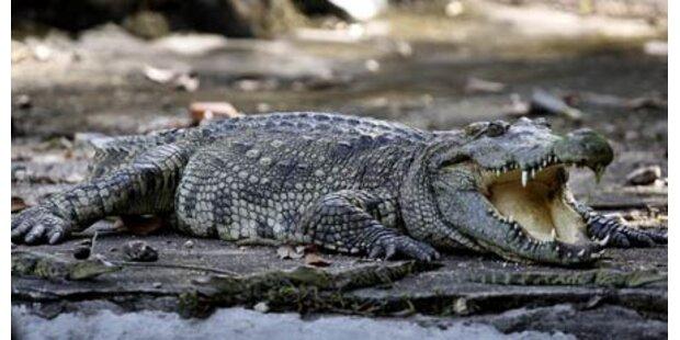 Krokodile töten acht Angler