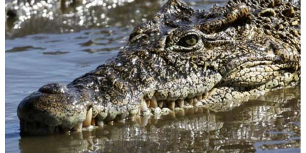 Krokodil mit Klingelton