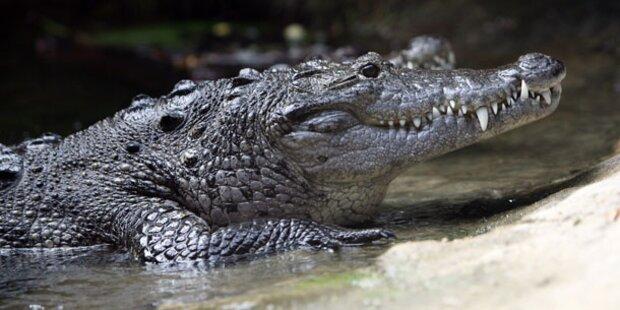 Krokodil frisst indonesischen Fischer