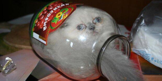 Katze wohnt in Einmachglas