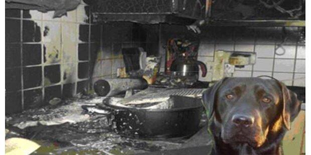 Gefrässige Hündin verursacht Küchenbrand