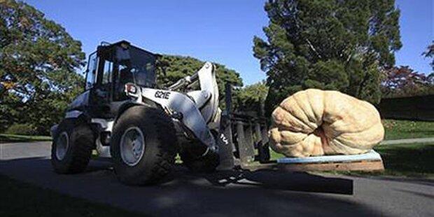 Größter Kürbis der Welt hat 821 Kilo