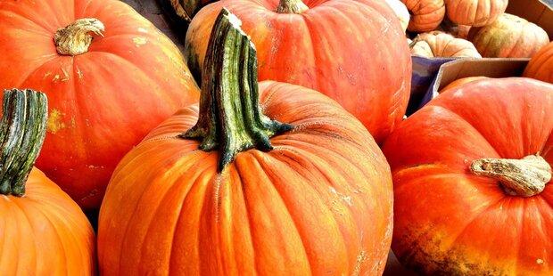 Diese Kürbisgerichte verzaubern Ihren Herbst