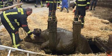 Feuerwehr rettet Kuh aus Jauchengrube