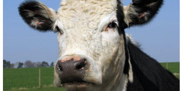 Siebenter BSE-Fall in Ö bestätigt