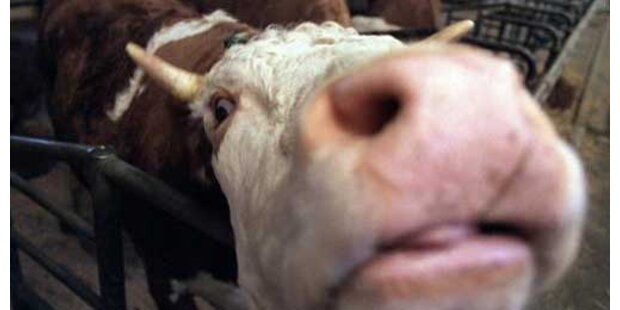 BSE bei Kuh in Kärnten entdeckt