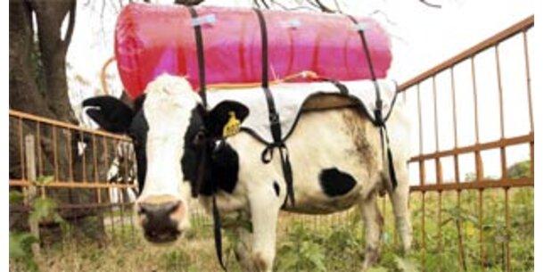Argentinische Rinder müssen jetzt in Tanks furzen
