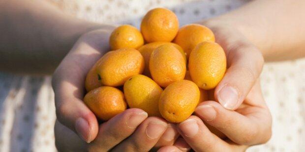 Kumquat als leckeres Trend-Obst