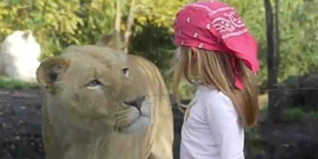Löwe erschreckt Mädchen zu Tode