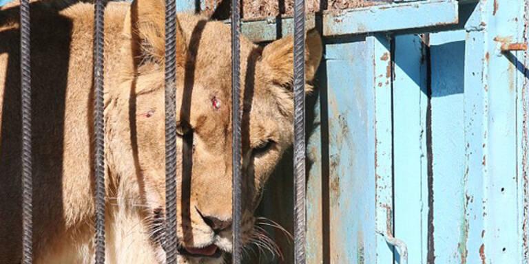 Das ist der traurigste Zoo der Welt