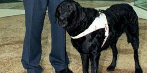 Hundehasser tötet Labrador mit Strychnin