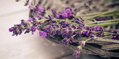 Lavendelöl hilft bei Angststörung