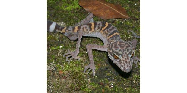 163 neue Arten am Mekong entdeckt