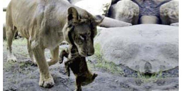 Rumänien muss die Hälfte seiner Zoos schließen