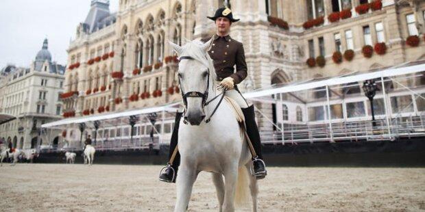Pferde-Show vorm Wiener Rathaus