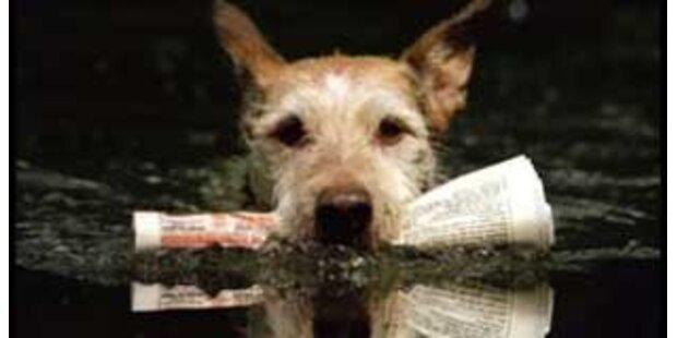 Hund fährt täglich alleine mit der Fähre