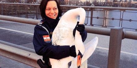 Polizei rettete lahmen Schwan