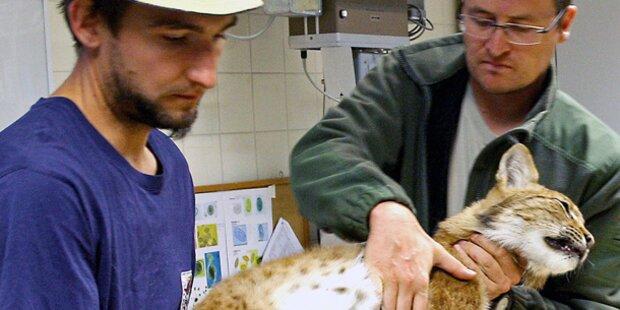 Schwere Vorwürfe gegen Zoo-Direktorin
