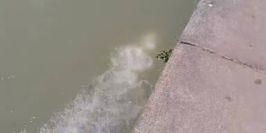 Woher kommen mysteriöse Luftblasen im Donaukanal?