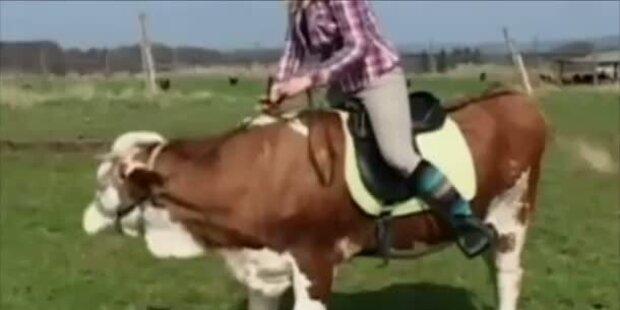 Luna, die springende Kuh