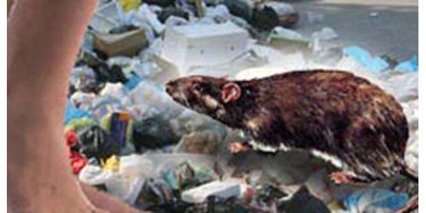 Verwahrloster lebte im Haus voller Mäuse und Müll