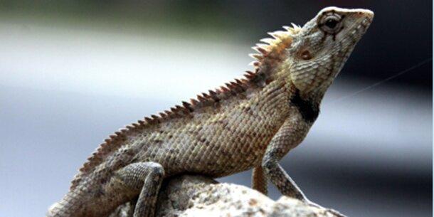 Jede 5. Reptilienart vom Aussterben bedroht