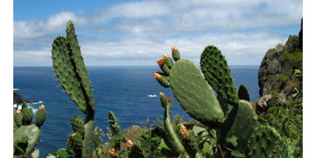 Madeira: Insel im Aufwind