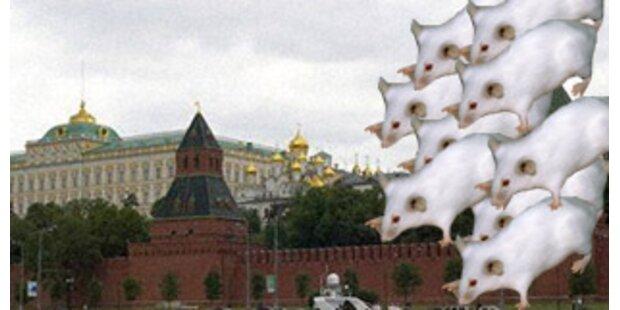 Rätselraten um Kreml-Bestellung von 3200 Mäusen