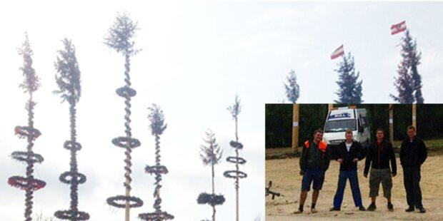 12 Maibäume in OÖ gestohlen