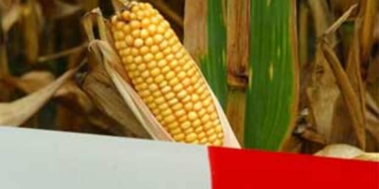 Pensionist im Bezirk Ried von Mais erdrückt