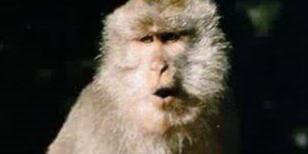 Affe entführte und tötete Baby in Malaysia