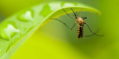 400.000 Malaria-Todesfälle jährlich