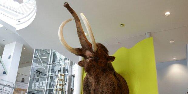 Wiedergeburt des Mammuts