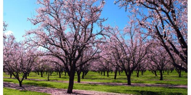 Dem Frühling entgegen