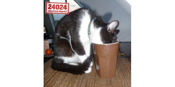 Manfred ist die frechste Katze