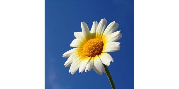 Die Sprache der Blumen