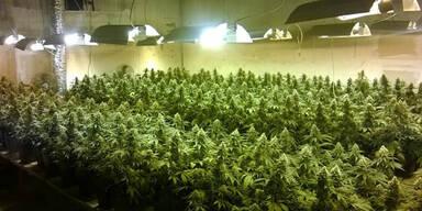 Verurteilt: Cannabis-Cop unterstützte Hasch-Import