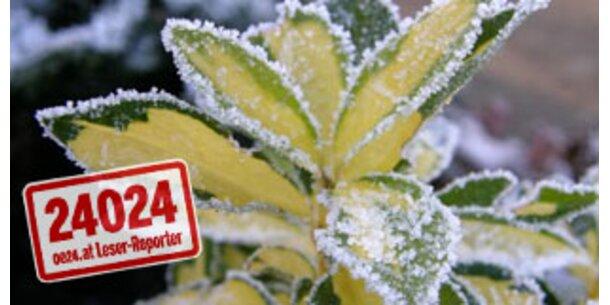 oe24.at wünscht allen Lesern frohe Weihnachten!