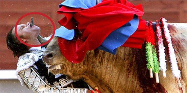 Stier spießt Torero am Unterkiefer auf