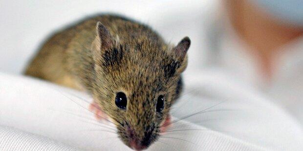 Maus im Flieger sorgt für Mega-Verspätung
